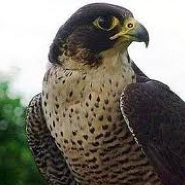 Dall'occhio del falco