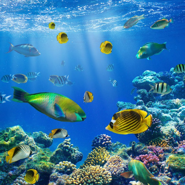 Misteri degli oceani