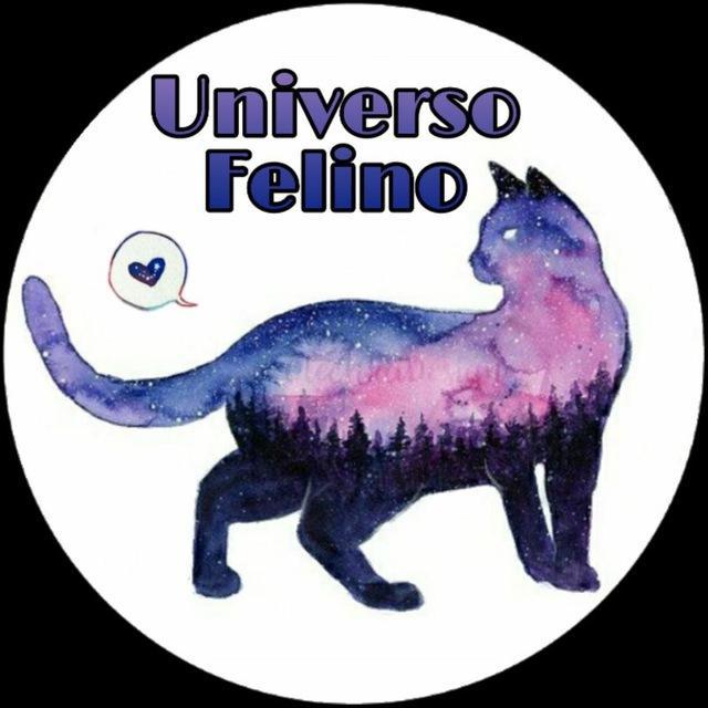 Universo Felino