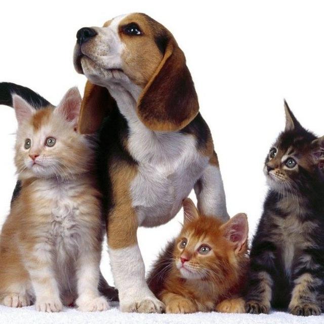 Tutto Animali